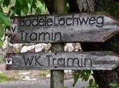 weinberg-tramin-19